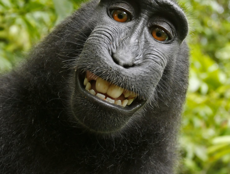 This Week in Travel: The Monkey Selfie Lawsuit Has Finally Reached a Settlement