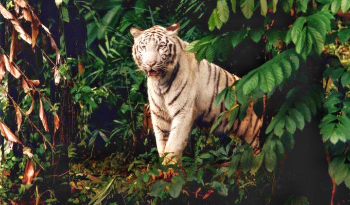 Sleep with the Beasts Singapore Zoo