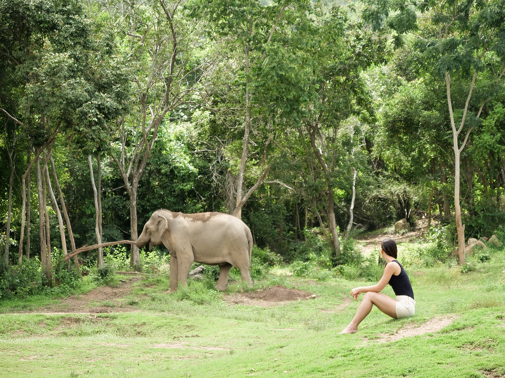 A girl watches an elephant in the wild at Samui Elephant Haven
